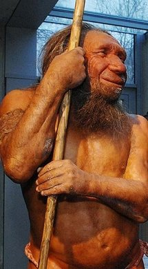 A reconstruction of a Neanderthal at a museum