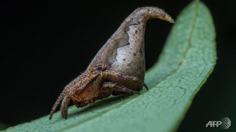 Indian scientists name new spider after Harry Potter hat