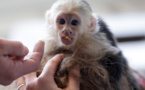 Bieber's pet monkey becomes 'German'