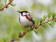 Record-shattering birds stay in air for 10 months: study