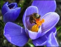Busy and valuable: Bees are worth 220 billion dollars a year