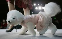 It's a dog's life! Russian canine fashion defies crisis