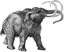 Doomed mammoths hung on for millennia