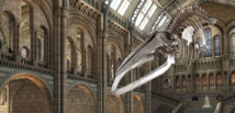 'Hope' the whale replaces 'Dippy' as London museum's skeleton star