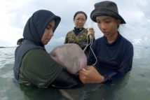 Baby dugong dies in Thailand while receiving medical care