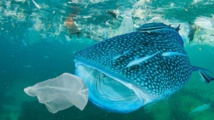 Study finds plastic waste in deep sea still like new after 20 years