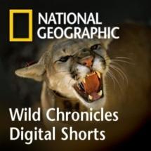 Namesake TV channel breaks National Geographic mold