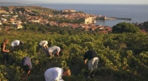Ancient French winemaking had roots in Italy