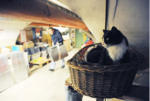 The nine lives of Russia's Hermitage cats