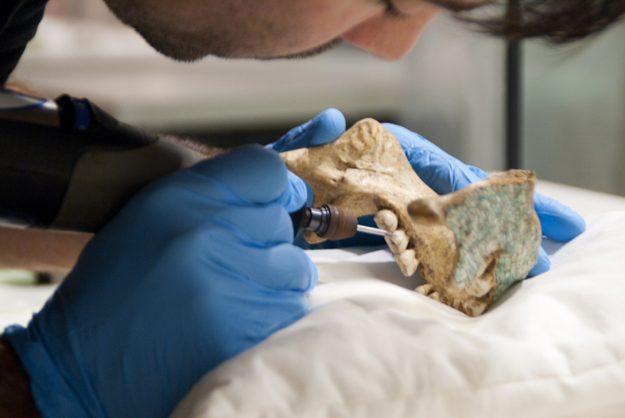 Ancient Mixtec skull art a forgery: Dutch museum