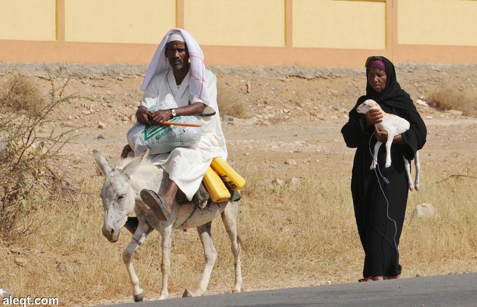 Yemen war threatens millennia-old mummies