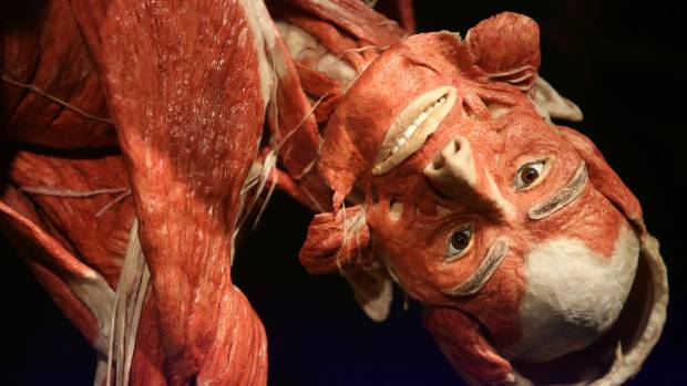 Museum of plastinated human bodies can stay open, Berlin court rules