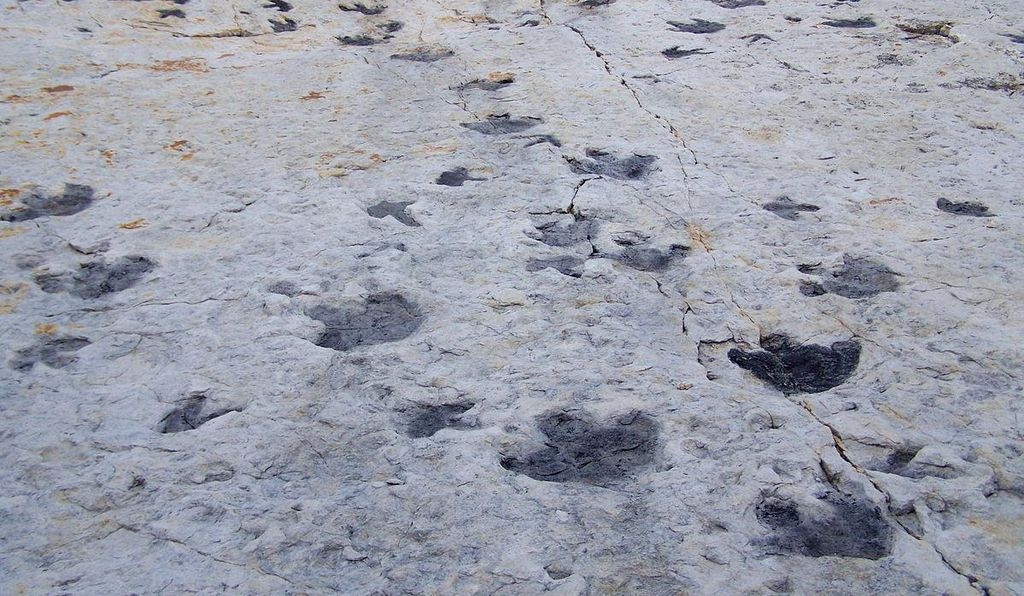 Dinosaur footprints found on Scottish island unearth Jurassic secrets