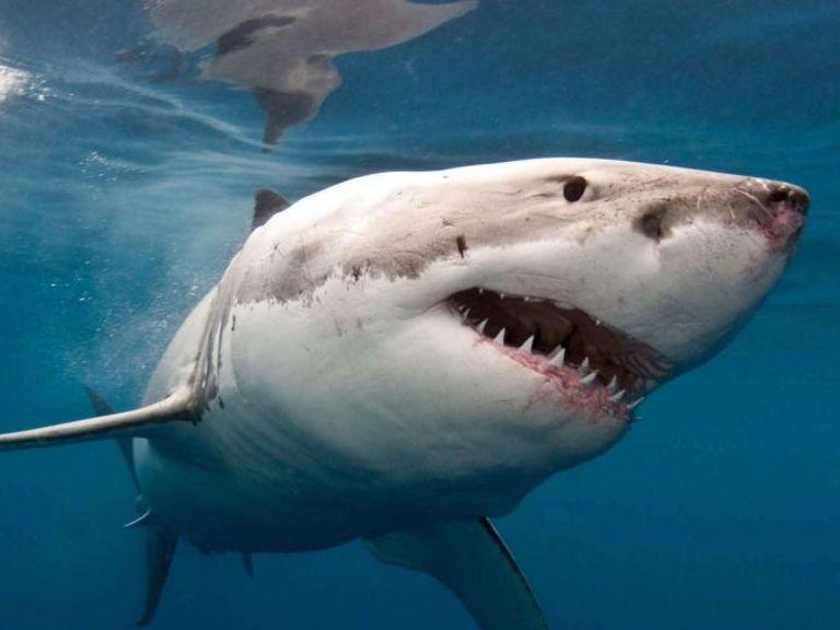 Shark grabs 10-year-old Australian boy from fishing boat in Tasmania
