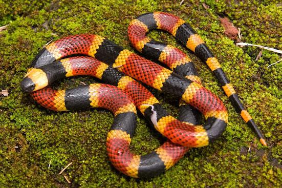 Scientists unravel mystery of snake venom