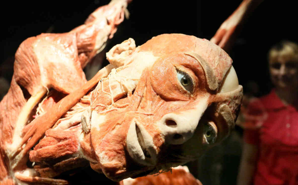 German 'Dr Death' opens corpse museum in Berlin