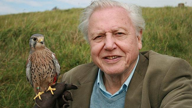 Naturalist David Attenborough says Sun can save Earth