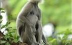 Sri Lanka hopes wildlife glories will attract new tourists