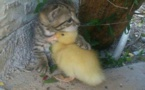 New Zealand village wants to ban cats