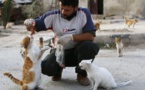 Syria's 'cat man' brings hope to abandoned animals in Idlib