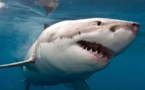 Shark grabs 10-year-old Australian boy from fishing boat in Tasmania